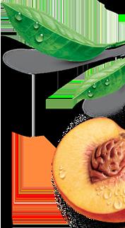 Estathé - Bio decorazione destra mobile