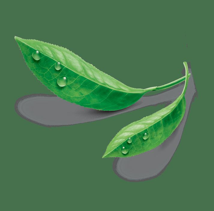Estathé - Bio Ingredienti